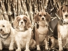 Dogs New YearsDecember 28, 201515201512281 of 1) (29)