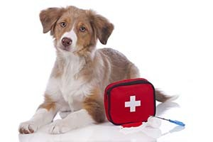 In the event of evacuation (fire, hurricane, etc.), you want to have a week's worth of supplies for both human and pets, or 10 days of supplies for a shelter in place (tornado, blizzard, etc).  Keep your emergency kit in waterproof, portable containers.